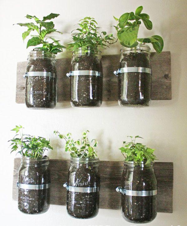DIY microgardens via Anthology Mag: Ideas, Indoor Herbs, Herbs Gardens, You, Mason Jars Herbs, Diy,  Flowerpot, Kitchens Herbs, Wall Planters