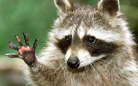 """""""Hold it right there!  Give me five minutes in the compost pile and nobody gets hurt."""""""