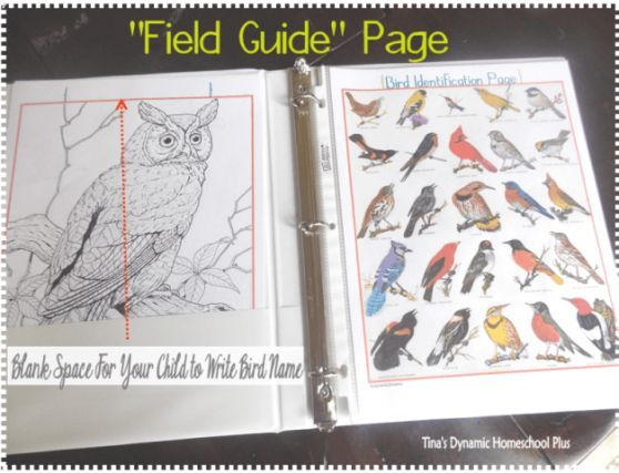 FREE bird notebook field page