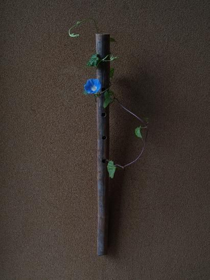 一花一葉 by アツシ Morning glory ikebana.