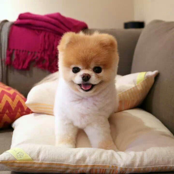 Boo The Cutest Dog Cake