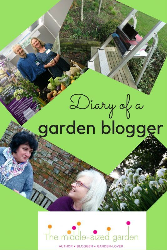 A week in the life of a garden blogger