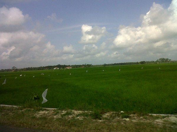 ♕ Enda Priskila's Photo: The landscape in Purworejo d :p *it's all green :D @d4u | Lockerz