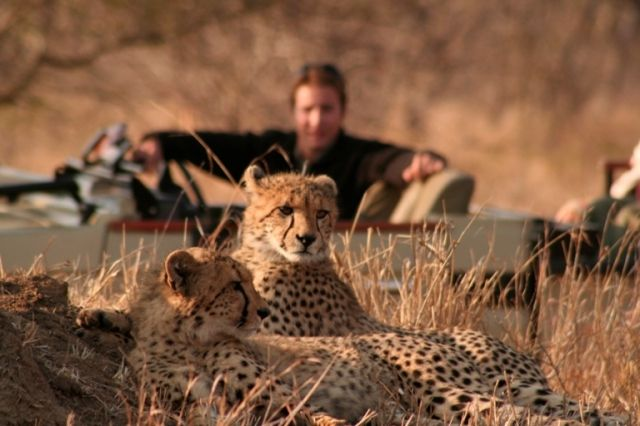 Go out on open land rover safaris with your dedicated rangers to spot the African wildlife, including Leopard, Lion and Cheetah, as well as an array of other mammals and birds. Book your family holiday with African Welcome.  http://www.africanwelcome.com/tours-and-safaris-south-africa-botswana-namibia-vicfalls/safari-packages-kruger-national-park-south-africa/kruger-family-safari-6-days