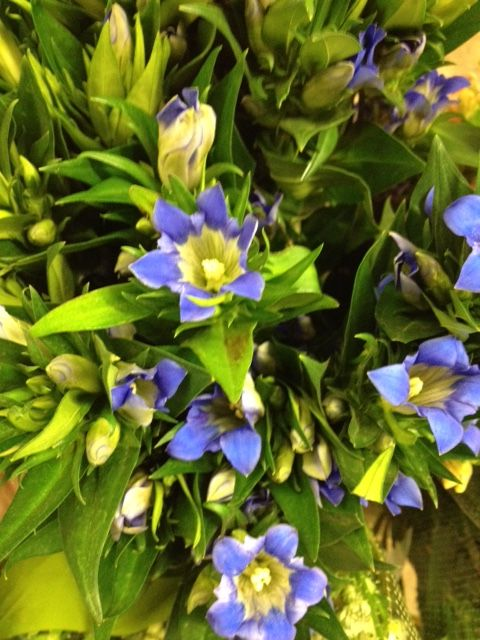 Gentiana 'Sawakaza'...Sold in bunches of 10 stems from the Flowermonger the wholesale floral home delivery service.