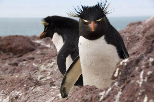 Penguins in Puerto Deseado
