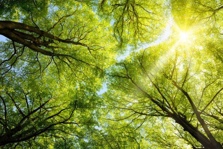 #PURIFIEZ VOTRE ORGANISME AVEC LA #SÈVE DE BOULEAU ! Retrouvez LA #PLANTE DU MOIS proposée par notre célèbre #phytothérapeute - botaniste Anne - Marie Pujol sur www.CHRISTOPHECANO.com.  http://www.christophecano.com/purifiez-votre-organisme-avec-la-seve-de-bouleau/  Pour plus d'infos : MP ou par mail contact@christophecano.com  Bonne fin de semaine !