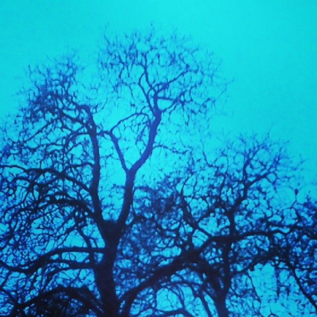 trees #creppy