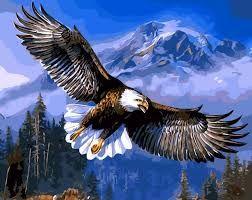 Resultado de imagem para fotos de águias voando