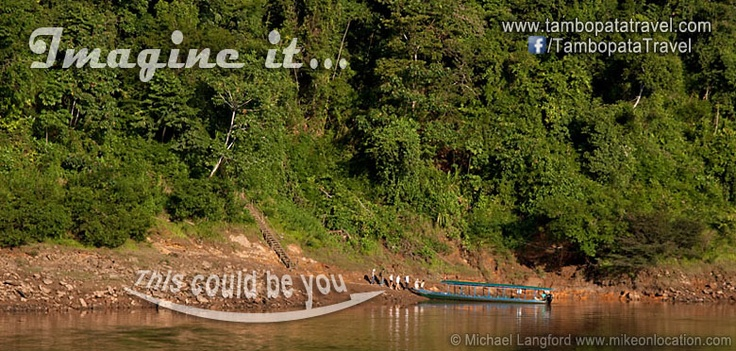 Imagine it, this could be you in the Peruvian Amazon Rainforest! #rainforest #rainforesttrips #rainforestexperiences #Peru #PeruvianAmazon #tourism #perutour #tourperu #Tambopata #TambopataTravel #boat #travel #tours #wildlife #trips #green #river