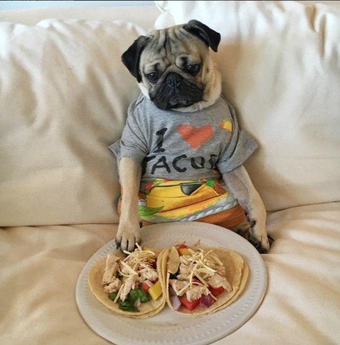 25 Times Doug the Pug Accurately Described Your Relationship With Food