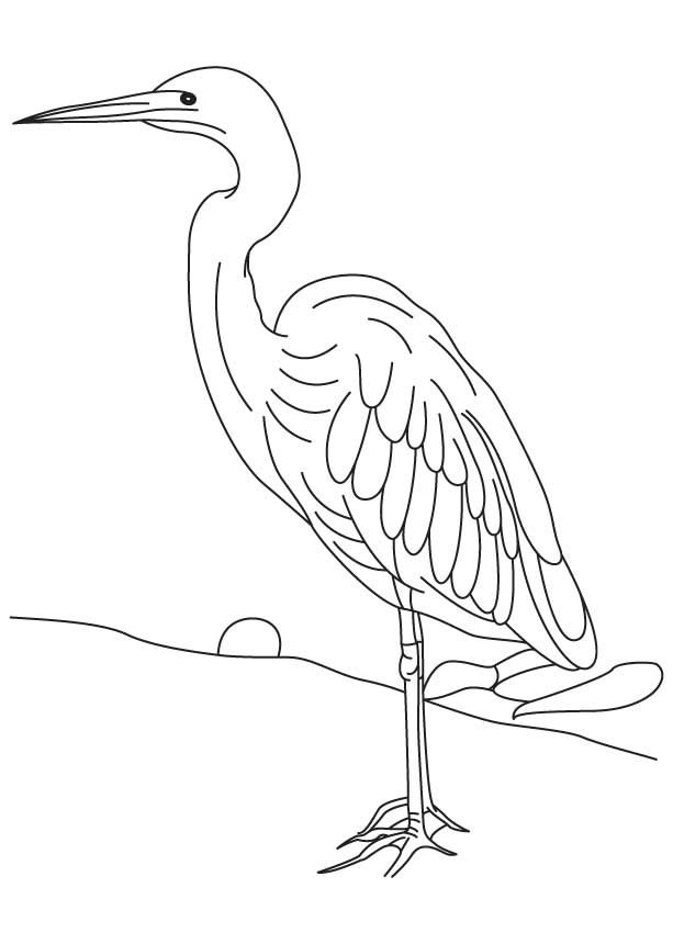 Heron Coloring Pages 2370687 Color Heron