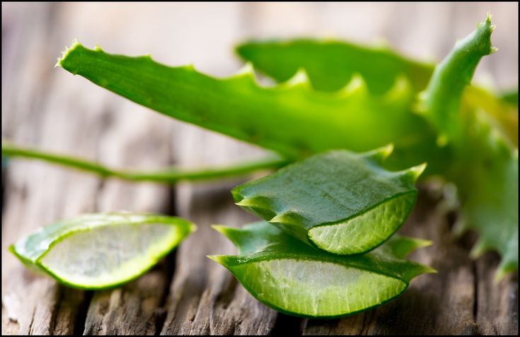 Among the various ailments that aloe vera is believed to help prevent or cure include heartburn, arthritis, joint pain, diabetes, eye and ear infections, and high cholesterol.
