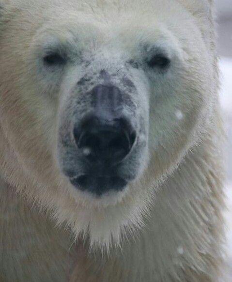 #polarbear ~ETS