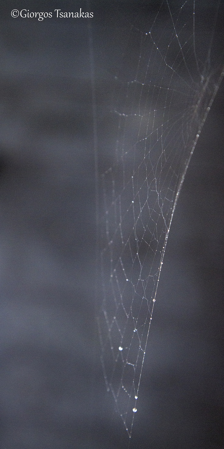 Spider's web (16-12-12)