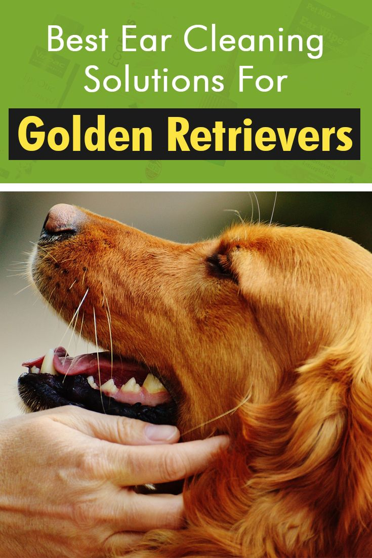 Find Out What We Recommend And Why Ear Cleaning Golden