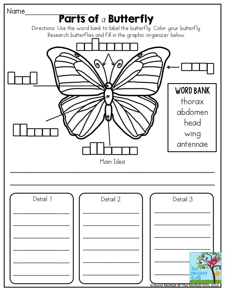 best 20 second grade science ideas on pinterest grade 2 science elementary science and 2nd. Black Bedroom Furniture Sets. Home Design Ideas