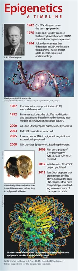 GEN | Magazine Articles: Understanding of Epigenetics Deepens