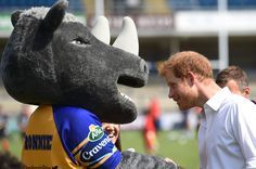 Prince Harry Photos Photos - Britain's Prince Harry meets Ronnie the Rhino, the mascot of Leeds Rhinos rugby league team during his visit to the Headingley Carnegie Stadium on July 6, 2017 in Leeds, Yorkshire. Today is first day of his two-day visit to the city. - Prince Harry Visits Leeds - Day 1