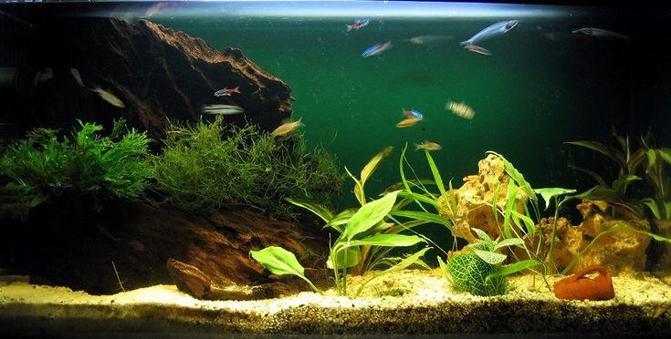 Los mejores peces de agua dulce para tu acuario - https://www.depeces.com/mejores-peces-de-agua-dulce-acuario.html