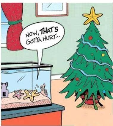 28 best Christmas images on Pinterest | Christmas jokes, Funny ...
