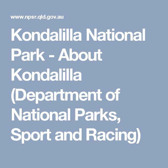 Kondalilla National Park - About Kondalilla (Department of National Parks, Sport and Racing)
