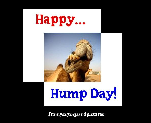 17 Best images about Hump Day on Pinterest | The office ...