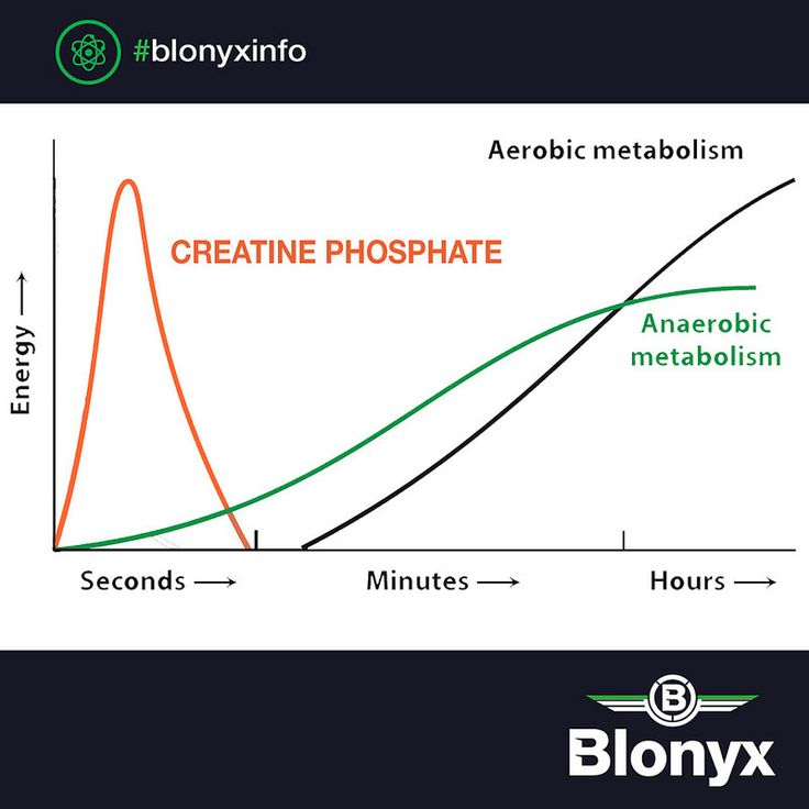 Did you know, the majority of energy for the first few seconds of high intensity exercise comes from the Creatine Phosphate system? Creatine stored in the muscles therefore acts as a supply of energy that is vital in rapid, explosive strength movements like the cleaning, snatching and deadlifting.