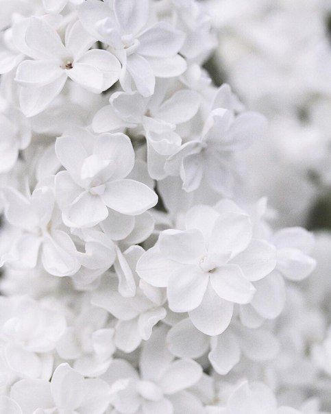 Photo Of White Flowers White White Aesthetic Aesthetic Colors