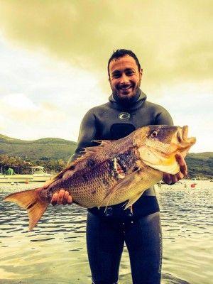 Pescasub all'isola d'Elba in Primavera con Sascha Orsi #spearfishing #pescainapnea #pescasub