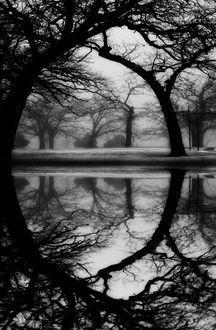 GorgeousBlack & White Photography, Gorgeous Reflections, Water Reflections, Black White Photography, White Reflections, Photography Trees, Black And White Love Pictures, Nature Reflections, Trees Reflections