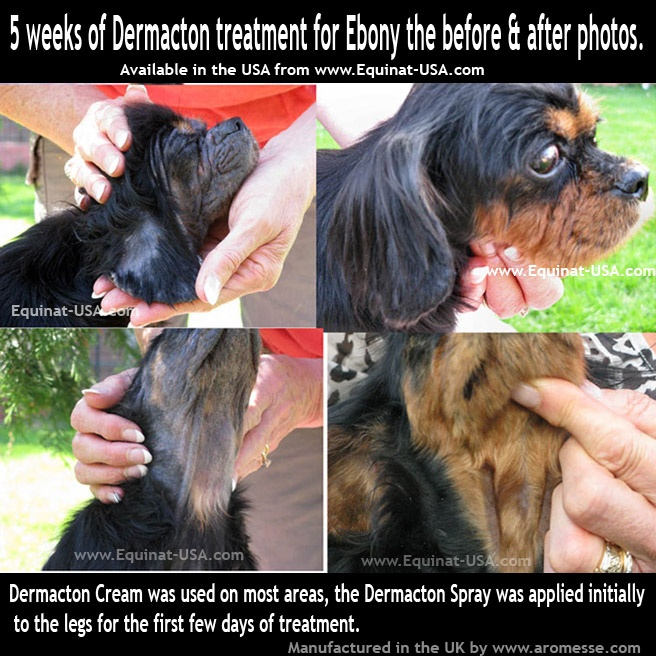 Dermacton Reviews Itchy Dogsick Dogking Charles Spanielsnatural Treatmentsnatural Skin Careseasonal Allergieshair