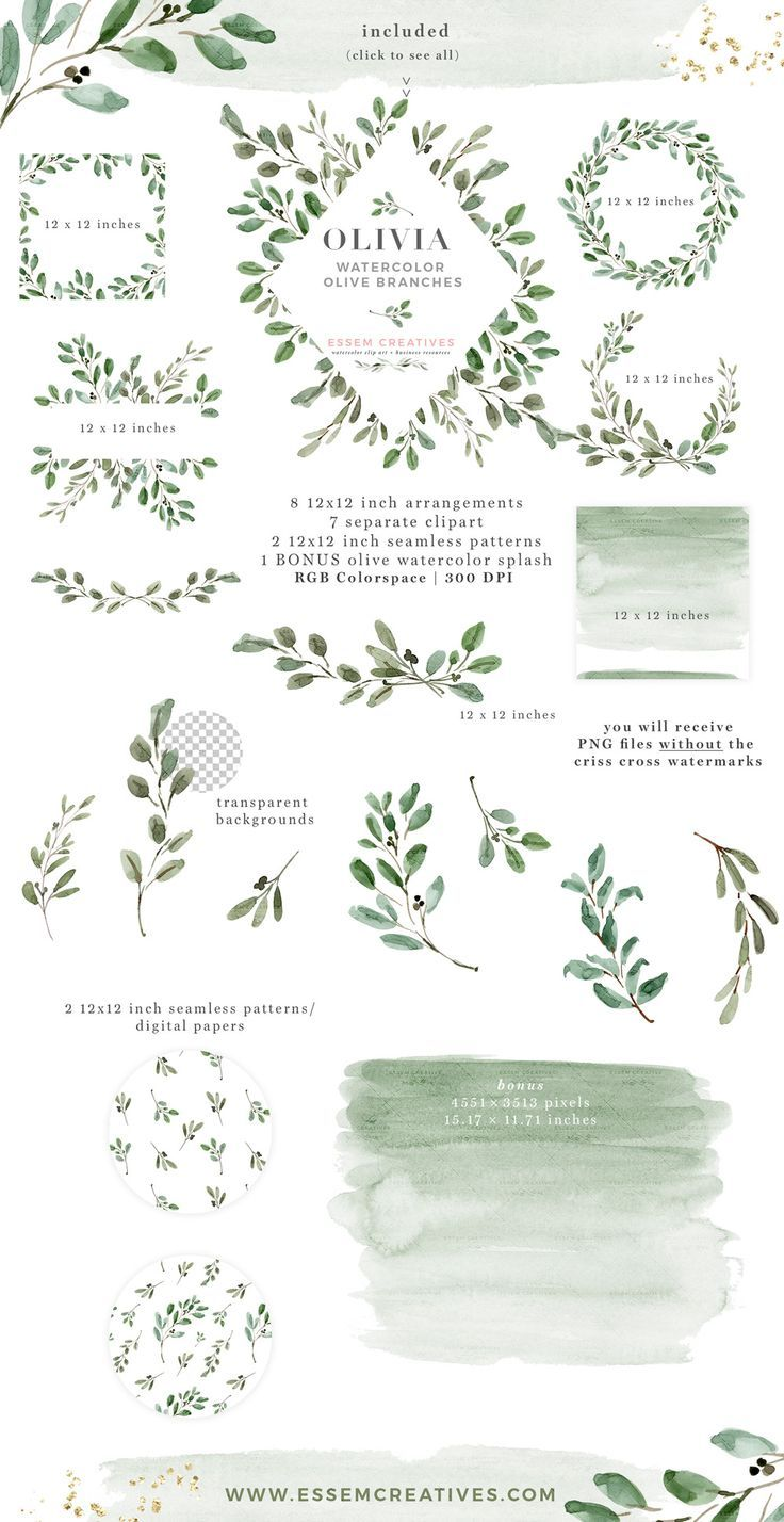 Olive Branches Clip Art And Vectors Olive Branch Clip Art Photoshop Brush Set