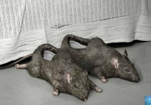 rat shoe - and 9 other strange shoes...