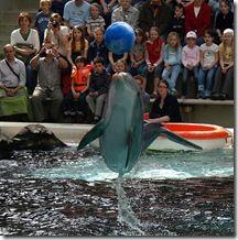 10 bonnes raisons de ne pas se rendre dans un delphinarium