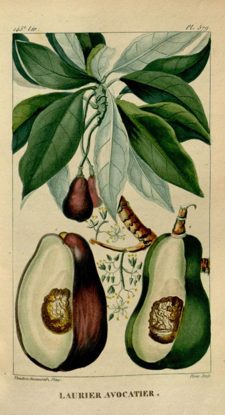 2349 best garden botanical prints images on pinterest botanical illustration botanical prints. Black Bedroom Furniture Sets. Home Design Ideas