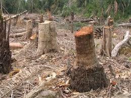 Deforestación de bosques en Argentina.