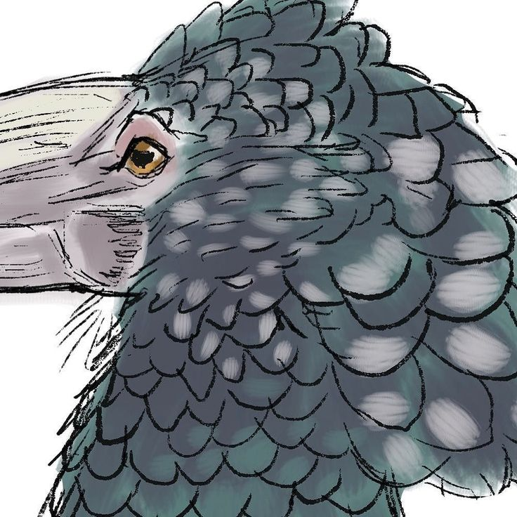 A super small preview for the @birdwhisperer.project Silvery-cheeked Hornbill challenge this month! The final will be shown on May 31.  Seemed appropriate post a month long challenge after a month long break. April was absolutely crazy. I was starting a new part time job working on two intense freelance jobs as well as pet sitting at 3 different houses during that month. I'm getting back into the swing of things back to posting and I'm really excited about getting back to YouTube! I'll have…