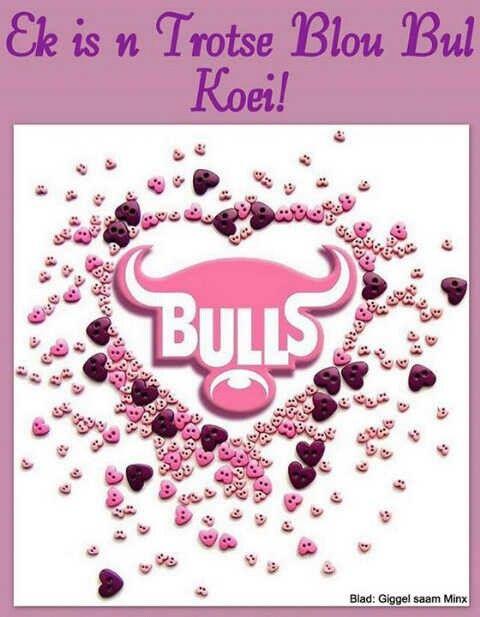 Blou bull koei