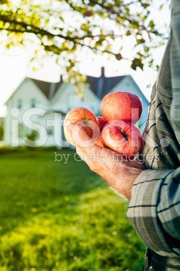 Réinterprétation d'une poignée de fruits à la ferme – banque photo libre de droits