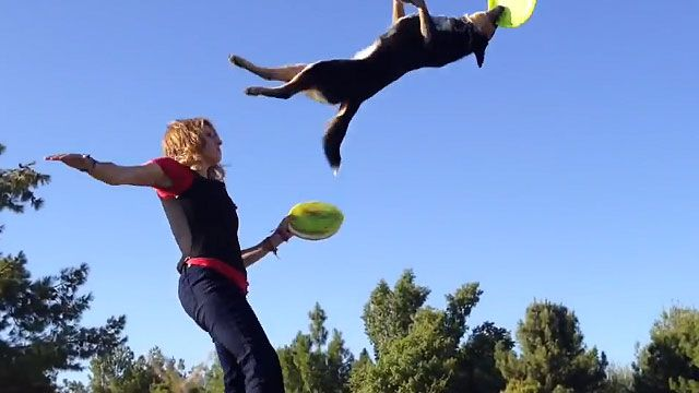 Amazing Frisbee Dogs
