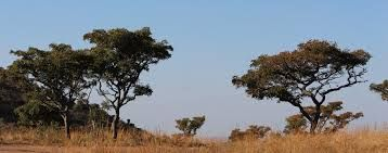 bushveld images - Google Search