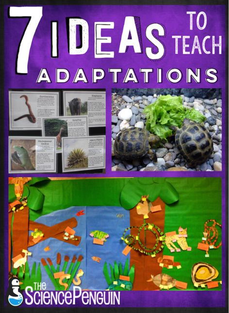 7 ideas to teach your students about adaptations-- projects, free cards, resources, and ideas.  Learn more!