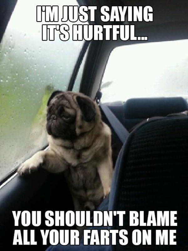 "Funny Pug Jokes | The Best Of ""Introspective Pug"" Memes - humorsharing.com"