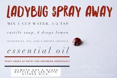 Ladybug natural deterrent spray lemon and orange oil with Castile soap. Just spray generously to rid the entry areas like windows and doors, and any areas already swarming with ladybugs or Asian beetles! See this Instagram photo by @natural_state_of_mind_blog • 2 likes