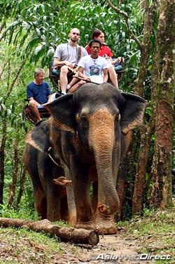 Elephant riding in Phuket, Thailand