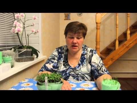 Особенности посадки капусты и лука-порея.