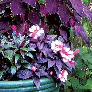 If my patio or balcony doesn't receive much light I plant colorful shade lovers :) - Sunset.com