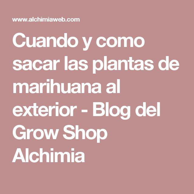Cuando y como sacar las plantas de marihuana al exterior - Blog del Grow Shop Alchimia