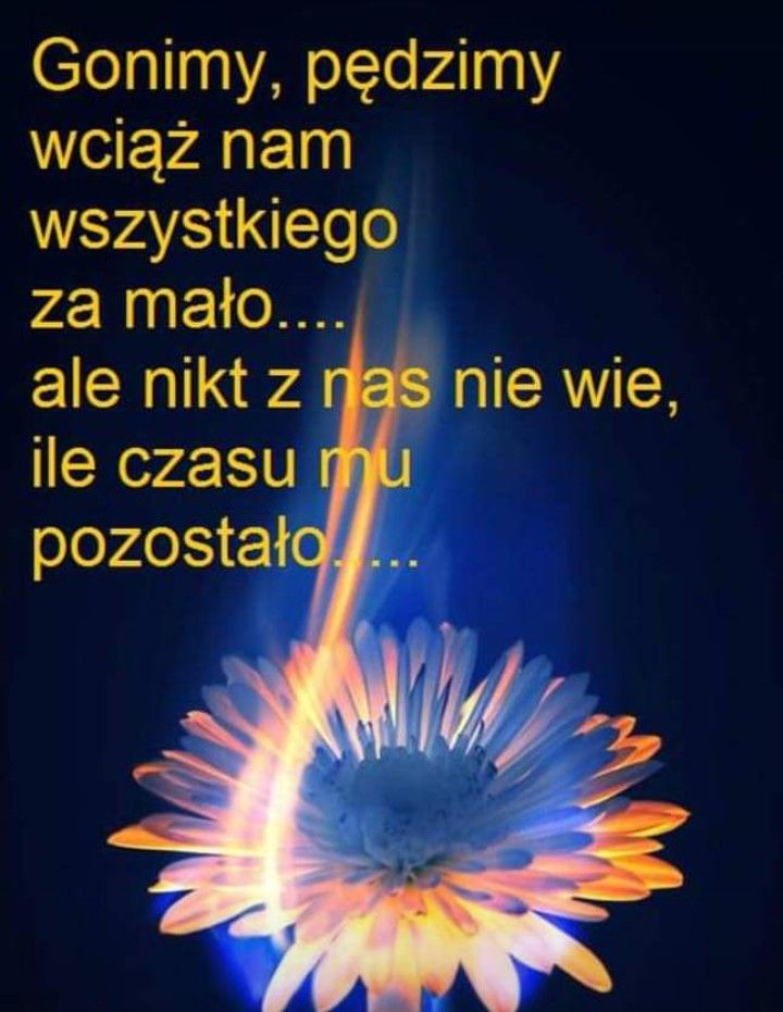 Pin By Monika On Cytaty Funny Quotes Polish Quotes Romantic Quotes